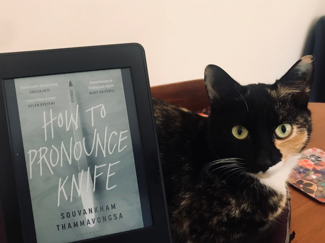 kindle edition of book with cat next to it